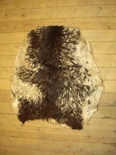Getskinn afrikanskt med hår